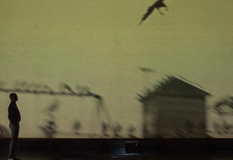 Birdie 11 -®PieroTauro.jpg